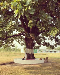 De boom in de Arhanta Ahram India